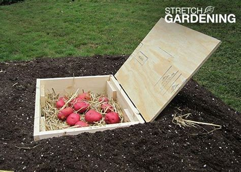 Root Vegetable Garden 77 Best Images About Root Cellars On
