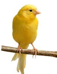 owning pet birds