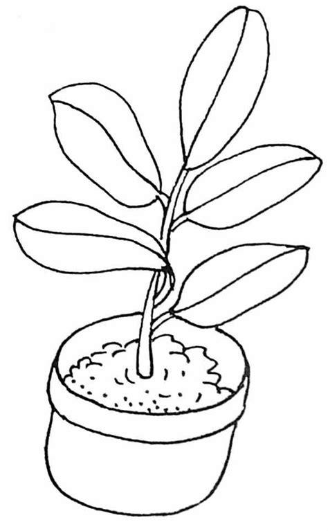 Dessin A Imprimer Plante Vs Zombiell