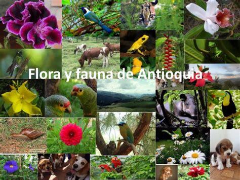 imagenes de venezuela flora y fauna flora y fauna de antioquia