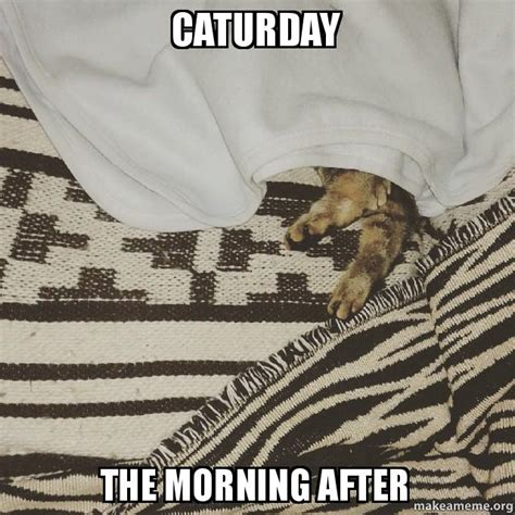 The Morning After Meme - caturday the morning after make a meme