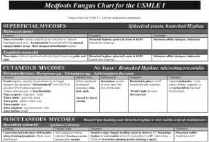 Hospital Rounding Template by Medfools Board Review Usmle Step 1 Usmle Step 2 Usmle