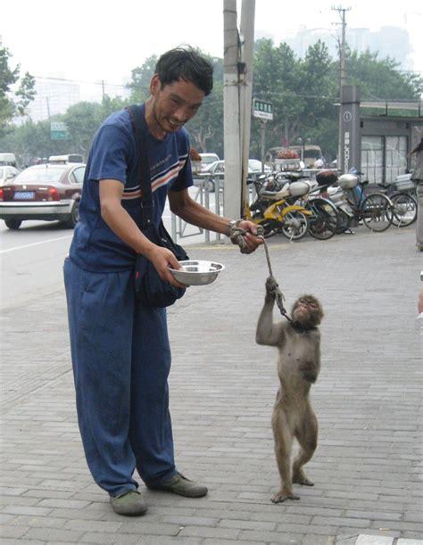 imagenes libres derechos wikipedia derechos de los animales wikipedia la enciclopedia libre