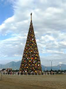 panoramio photo of tallest christmas tree in the