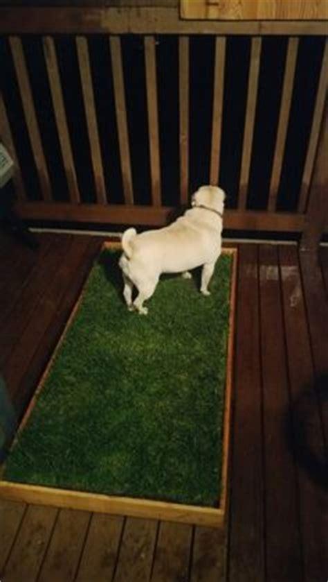 balcony dog bathroom 1000 ideas about apartment dog on pinterest dog pee