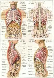 les 25 meilleures id 233 es de la cat 233 gorie anatomie du