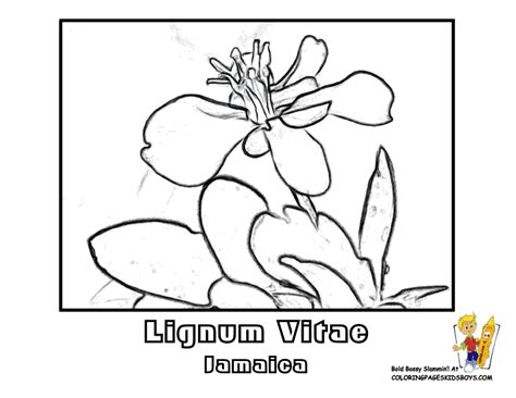yellow elder coloring page world flower coloring nations germany norway free