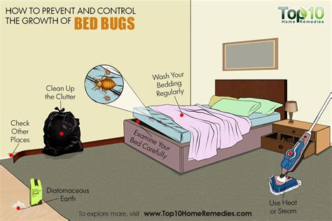 how to prevent bed bugs how to prevent and control a bed bug infestation top 10