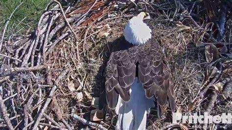 WATCH LIVE: 'Eagle cam' streaming SW Florida bald eagle ...