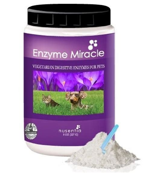 enzymes for dogs 17 best images about epi on chihuahuas beautiful dogs and for dogs