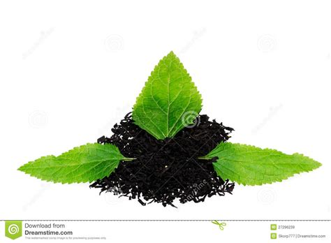 imagenes te negro t 233 negro con la hoja im 225 genes de archivo libres de