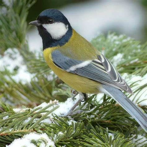 winter bird food recipes