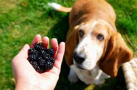 best food for diabetic dogs best food options for diabetic dogs petmd