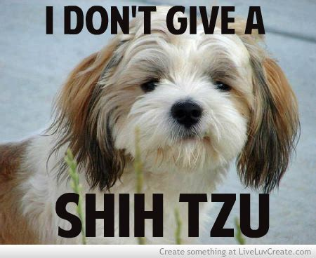 shih tzu quotes hilarious quotes about shih tzu quotesgram