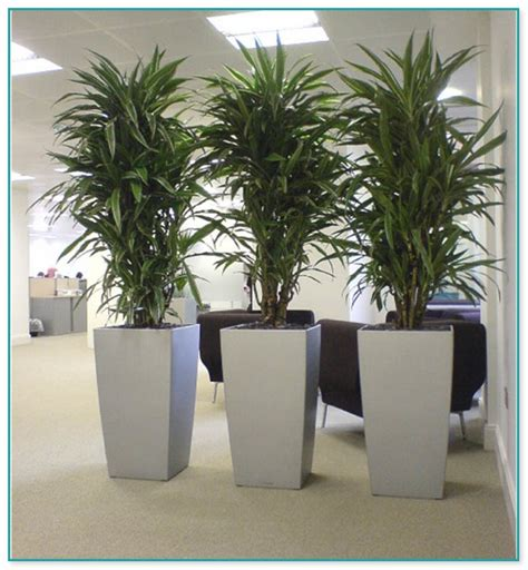 indoor house plants for sale large house plants for sale 28 images garden plants