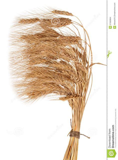 sheaf of wheat stock images image 27060864