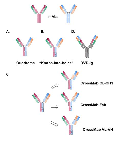 an outlook on bispecific antibodies methods of production