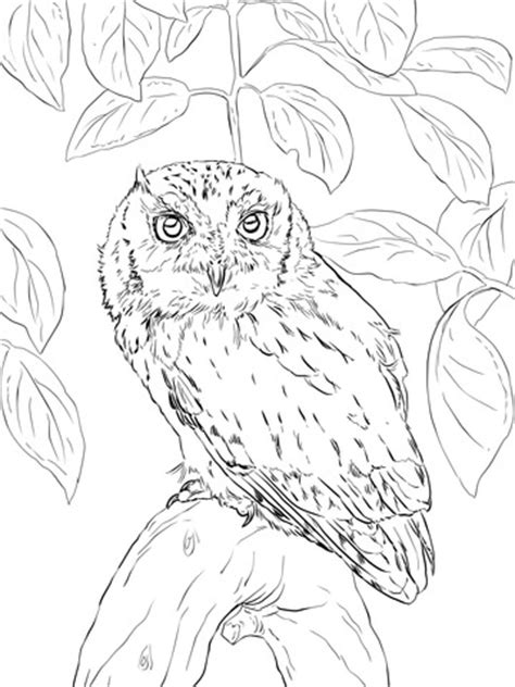 screech owl coloring page eastern screech owl coloring page free printable