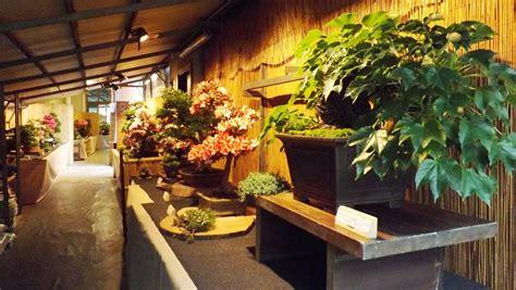 nomi per negozio di fiori piante e fiori capo verde climi piante e paesaggi dellu