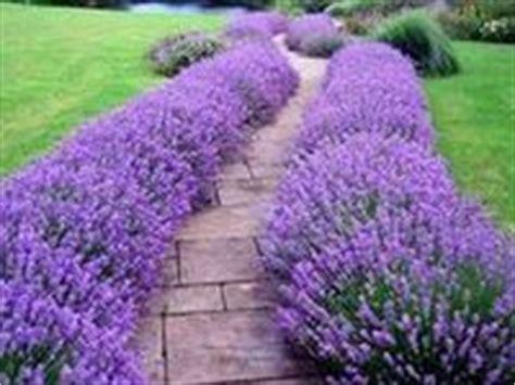 high heat plants 39 best high heat drought tolerant flowers and plants