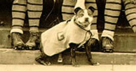 Sergeant Stubby Georgetown Starting In 1921 Stubby Attended Georgetown Center With Conroy And Became The