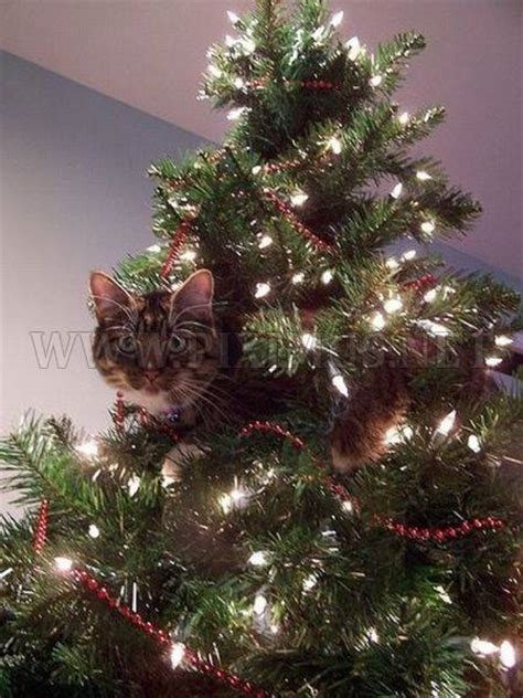 cats in christmas trees animals