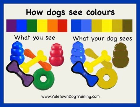 how dogs see are dogs colour blind health and wellbeing the vet pet guide