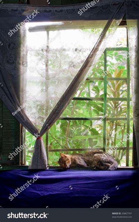 Window Sill Stock Cat Sleeping On A Window Sill Stock Photo 25867747