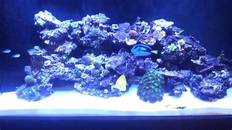 gallon reef build aquascape update  youtube