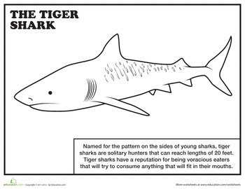 coloring pages of tiger sharks 20 sharks for shark week coloring pages education com