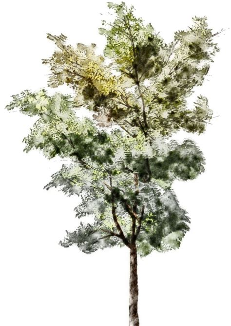 tree sketches colors search graphic trees - Baum Architektur