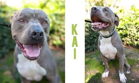 karma puppy rescue karma rescue daily tagdaily tag