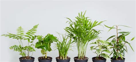 plants that do well indoors how indoor plants can make you happier and healthier