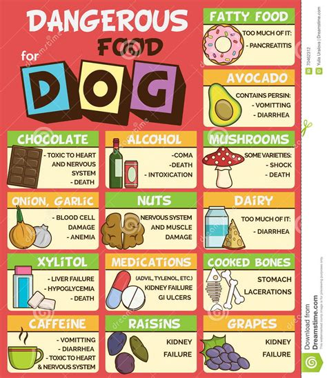 poisonous foods for dogs dangerous food for dogs stock vector image 70462312