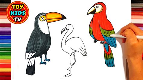 let s learn about unique birds letã s how to draw a bird parrot flamingo toucan peacock