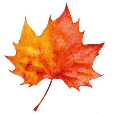 Autumn Leaf the autumn leaf test