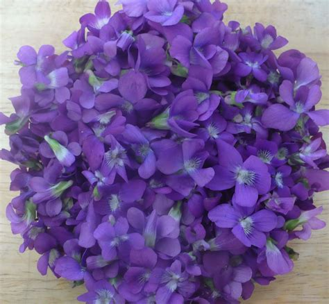 violet s the enchanted tree sweet violet syrup