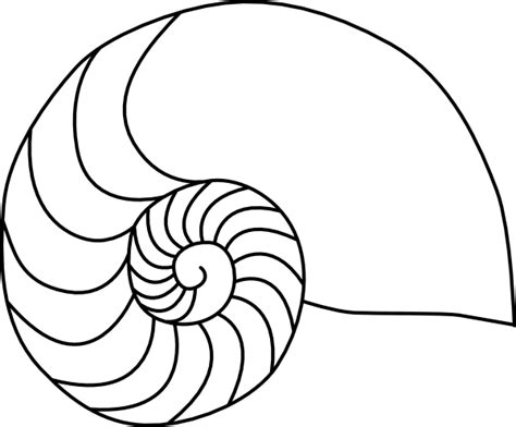 Shell Outline by Nautilus Clip At Clker Vector Clip Royalty Free Domain