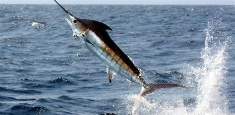 metal shark boats kenya top 10 seafood you should not eat terrific top 10