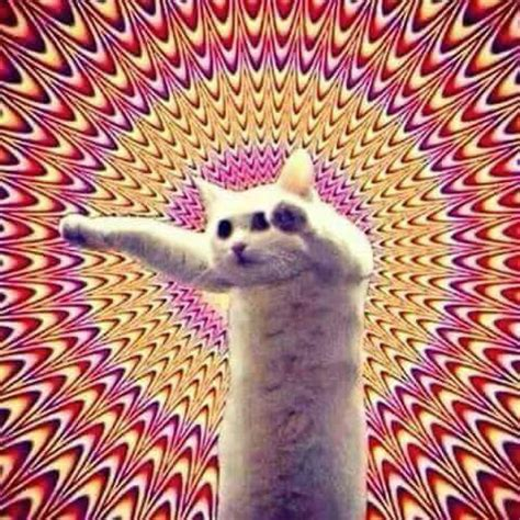 imagenes hipster gatos gatos hipster wallpaper