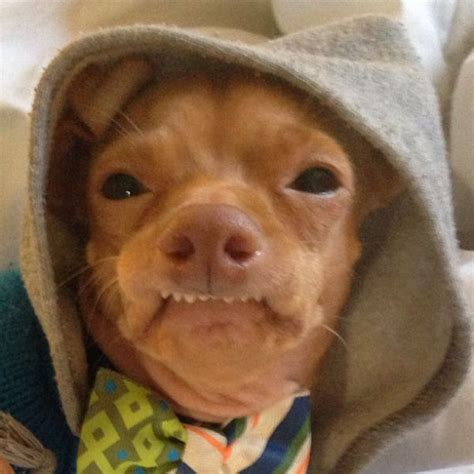Ugly Dog Meme - the most adorable ugly dog ever 23 pics izismile com
