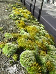 belles mousses parisiennes c 244 t 233 jardin