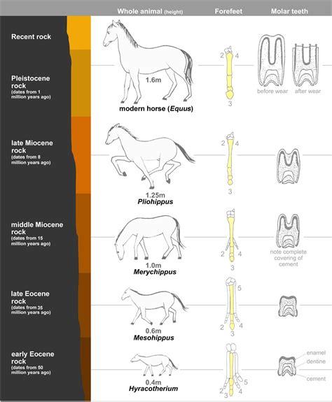 the pattern of numbers represents living environment evoluzione del cavallo wikipedia