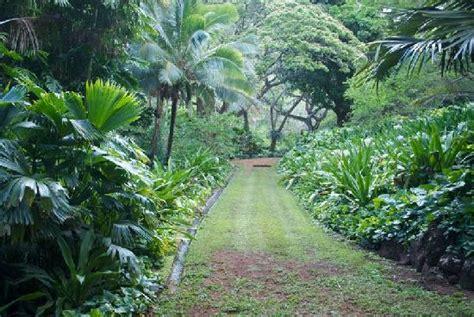 Allerton Garden Kauai by Walking Path In The Allerton Gardens Picture Of Allerton