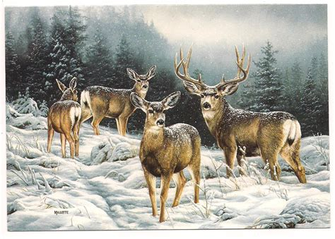judy s postcards plus deer christmas card looks just