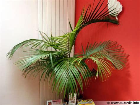 Délicieux plante interieur palmier #1: palmier-interieur-600x450.jpg