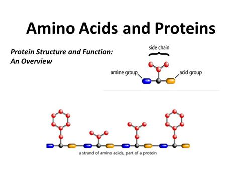 protein amino acids amino acids and proteins ppt