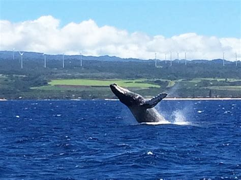 catamaran boat cruise oahu north shore catamaran whale watching cruise hawaii