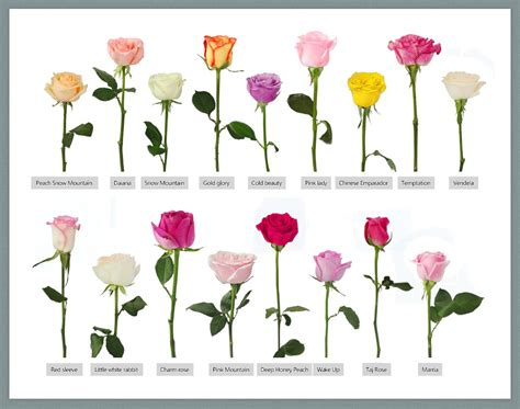 names of flowers types of flowers with pictures and peony flower forms crickethillgarden 25 best ideas about