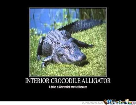 Alligator Meme - croc or alligator by skillrex meme center